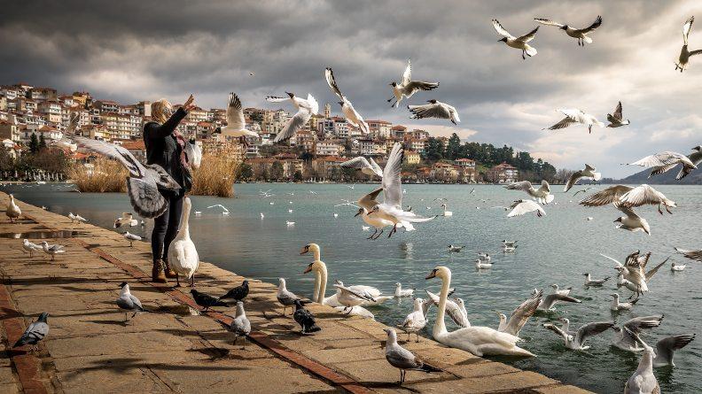 animals-avian-beach-760984